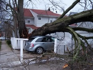 Homeowners Insurance - Preventing Tree Damage to Property