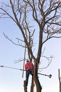 tree trimming winterizing tips
